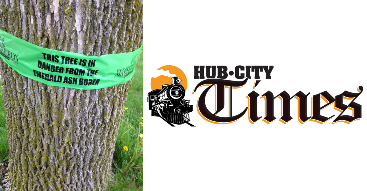 Last year the city — in concert with several community groups — placed green ribbons on ash trees to raise awareness of emerald ash borer.